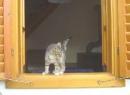 Strümpfchen im Fenster