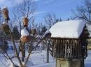 Topfbaum + Brunnen im Winter